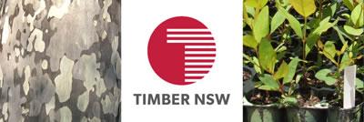 13-Timber-NSW.jpg