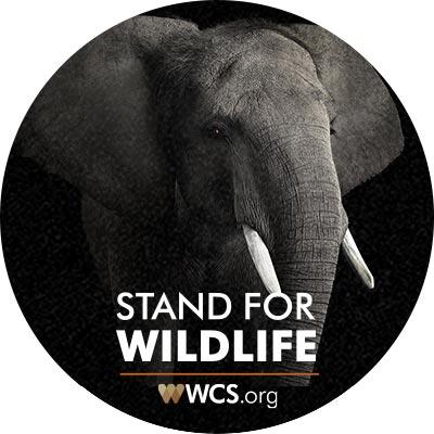 WCS-email-signup-elephant-faad4fcbfd10d2f3e38f7b802c262198.jpg